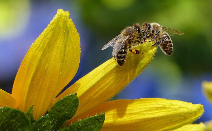 Florystyka i pszczelarstwo – nowe kierunki kształcenia