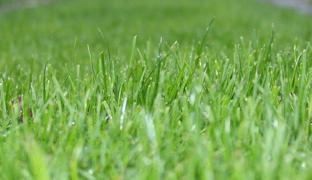 Automatyczne nawadnianie ogrodów – czy warto?