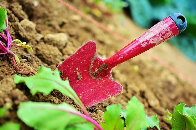Lubisz pracować z roślinami? Wybierz się na kurs aranżacji ogrodów