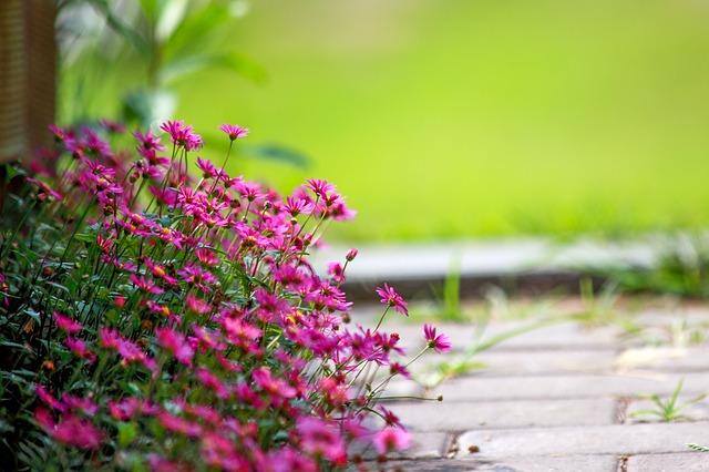 Prace w ogrodzie. Jakie kwiaty kwitną w lipcu?